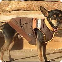 Adopt A Pet :: Cricket - Chimayo, NM