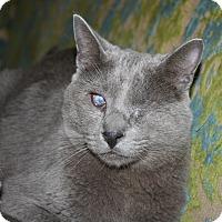 Adopt A Pet :: Encore - Santa Rosa, CA
