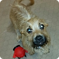 Adopt A Pet :: Meatloaf - Phoenix, AZ