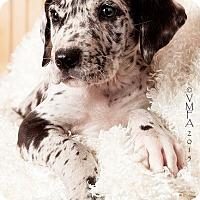 Adopt A Pet :: Oak - Albuquerque, NM