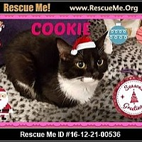 Domestic Shorthair Cat for adoption in Highland, Michigan - Cookie