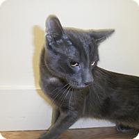 Adopt A Pet :: Lachlan - Milwaukee, WI