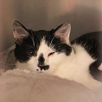 Adopt A Pet :: Maria - Carlisle, PA