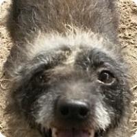 Adopt A Pet :: Dori - East Hartford, CT