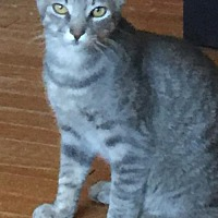 Adopt A Pet :: Jess - Murfreesboro, NC