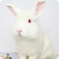 Lionhead Mix for adoption in Knoxville, Tennessee - Mounds