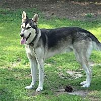 Adopt A Pet :: Bandit 2 - New Bern, NC