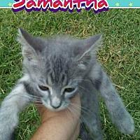 Adopt A Pet :: Samantha - Elgin, OK