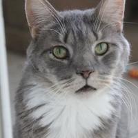 Adopt A Pet :: Josh - Hastings, MN