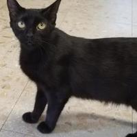 Adopt A Pet :: Katherine - Wellsville, NY