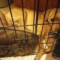 Adopt A Pet :: Quin - Fairfield, OH
