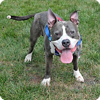 Adopt A Pet :: Spike - Cranford, NJ