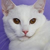 Adopt A Pet :: Kit Kat - Encino, CA