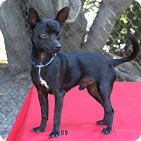 Adopt A Pet :: Otis - Santa Barbara, CA
