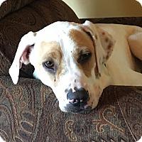 Adopt A Pet :: Nutters - Washington, DC