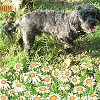 Adopt A Pet :: Remy - Longview, TX