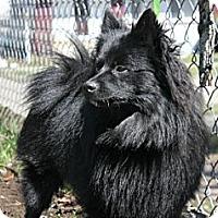 Adopt A Pet :: Cocoa - Grand Rapids, MI