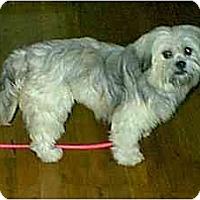 Adopt A Pet :: benny - dewey, AZ
