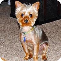 Adopt A Pet :: Beau - Spring Hill, FL