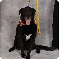 Adopt A Pet :: Abagail - Fort Hunter, NY