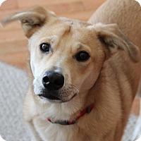 Adopt A Pet :: Egon*ADOPTED!* - Chicago, IL