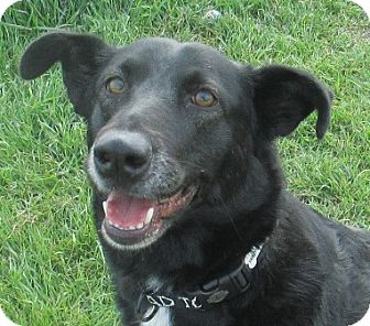 Labrador Retriever Mix Dog for adoption in Lloydminster, Alberta - Julia