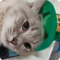 Adopt A Pet :: Blossom - Harrisburg, NC