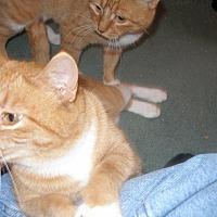 Adopt A Pet :: Patti - Rochester, MN
