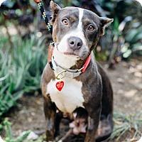 Adopt A Pet :: Ursula - Los Angeles, CA