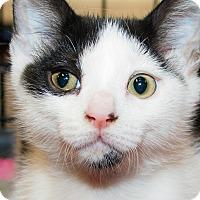 Adopt A Pet :: Pirate - Irvine, CA