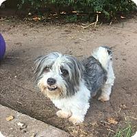 Adopt A Pet :: Squeaker - Astoria, NY