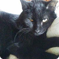 Adopt A Pet :: Walter - York, PA