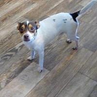 Adopt A Pet :: MAX (CC-DG) - Tampa, FL