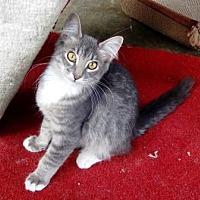 Adopt A Pet :: Peter Pan - Lathrop, CA
