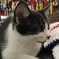 Adopt A Pet :: Pierre - Vacaville, CA