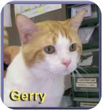 Domestic Shorthair Cat for adoption in Aldie, Virginia - Gerry