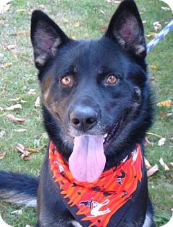 Husky Mix Dog for adoption in Red Bluff, California - Arrin
