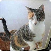 Adopt A Pet :: Ginger - Colmar, PA