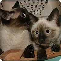 Adopt A Pet :: Chi - Dallas, TX