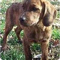 Adopt A Pet :: Wilda - Allentown, PA