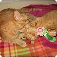 Adopt A Pet :: Peanut & Pumpkin - Davis, CA
