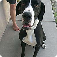 Adopt A Pet :: Lola - Albuquerque, NM