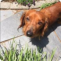 Adopt A Pet :: Tulley - Decatur, GA