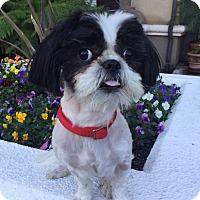Adopt A Pet :: OLAF - Los Angeles, CA