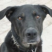 Adopt A Pet :: Bosco - Minneapolis, MN