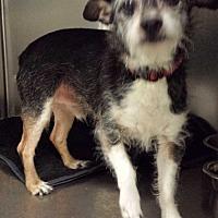 Adopt A Pet :: Roger - Westminster, CA