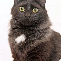 Adopt A Pet :: Cozzi - Encinitas, CA
