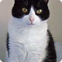 Adopt A Pet :: Mindy - Montreal, QC