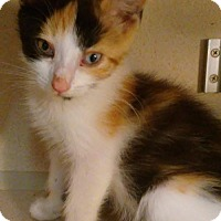Adopt A Pet :: Autumn - Flushing, NY