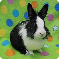 Adopt A Pet :: Lavender - Scotts Valley, CA